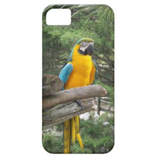 コンゴウインコのIPhoneの青い箱 iPhone SE/5/5s ケース