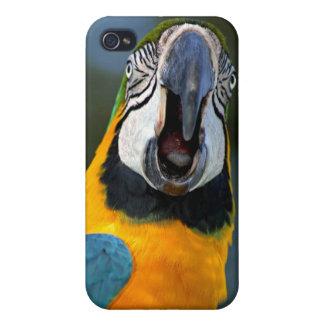 コンゴウインコ iPhone 4/4S CASE