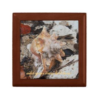 コンシュの貝および珊瑚 ギフトボックス