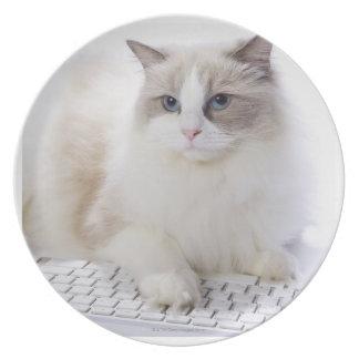 コンピュータのキーボードのRagdoll猫 プレート