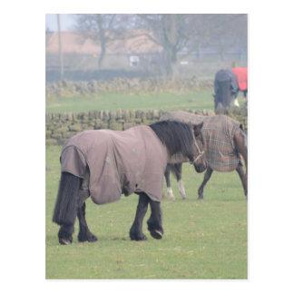 コートとの冬の馬 ポストカード