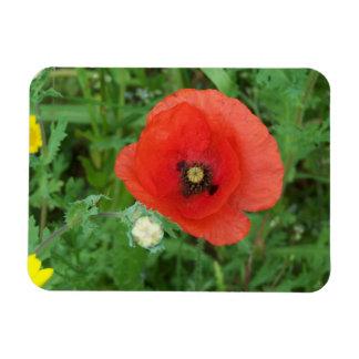 コーニッシュの野生の花のケシ マグネット