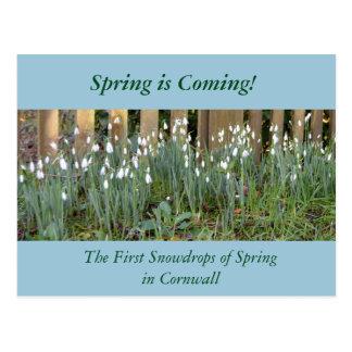 コーンウォールの春の最初のSnowdrops ポストカード
