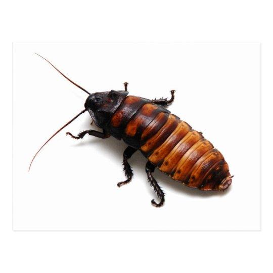 ゴキブリ ポストカード