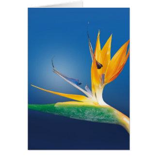 ゴクラクチョウカ属。 花極楽鳥 カード