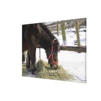 ゴトランドからの最初に原産の馬 キャンバスプリント