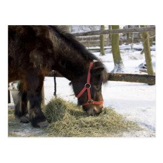 ゴトランドからの最初に原産の馬 ポストカード