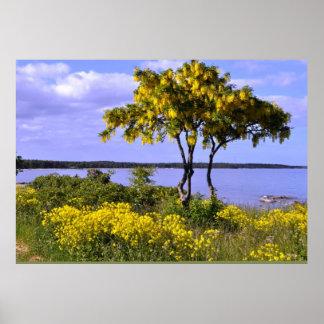 ゴトランドの島のバルト海のスウェーデンの海景 ポスター