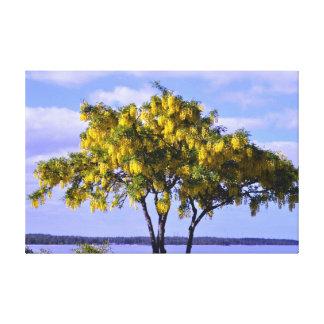 ゴトランドの島のバルト海のスウェーデンの黄色い木 キャンバスプリント