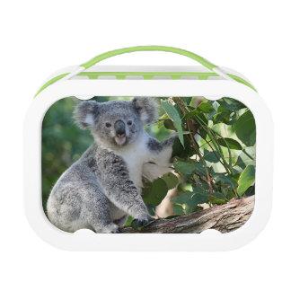ゴムの木のランチボックスのかわいく愛らしいオーストラリアのコアラ ランチボックス