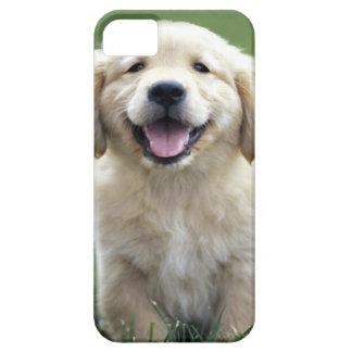 ゴールデン・リトリーバーの子犬のiPhone 5の場合 iPhone 5 Case