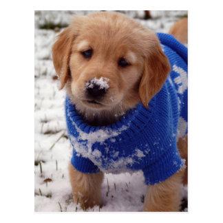 ゴールデン・リトリーバーの子犬 ポストカード