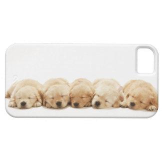 ゴールデン・リトリーバーの子犬 iPhone 5 カバー