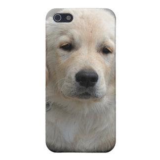 ゴールデン・リトリーバーの小犬のかわいく美しい写真 iPhone 5 CASE