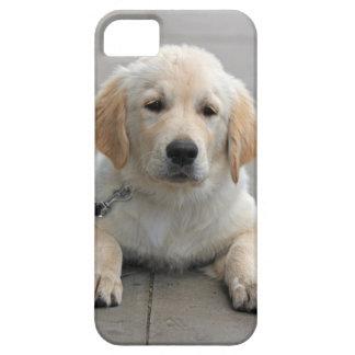 ゴールデン・リトリーバーの小犬のかわいく美しい写真 iPhone SE/5/5s ケース