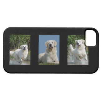 ゴールデン・リトリーバーの愛犬家の写真のiphone 5の場合 iPhone 5 case
