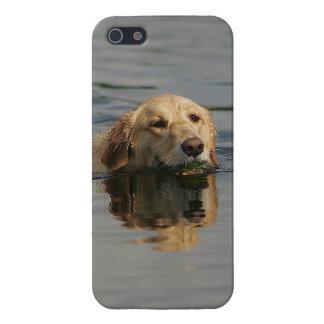 ゴールデン・リトリーバーの水泳 iPhone 5 ケース