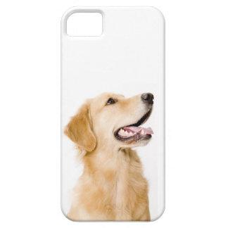 ゴールデン・リトリーバーのiPhoneの場合 iPhone 5 ケース