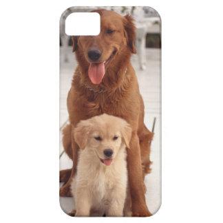 ゴールデン・リトリーバー2 iPhone 5 ベアリーゼアケース