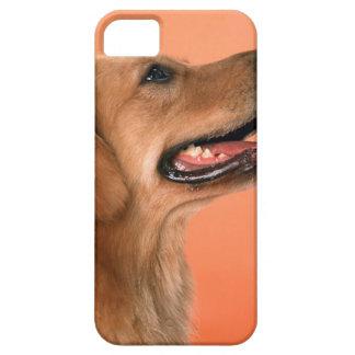 ゴールデン・リトリーバー7 iPhone 5 カバー