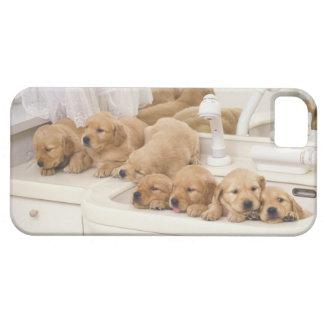 ゴールデン・リトリーバー; 比較的モダンのおよび2つはあります iPhone 5 カバー
