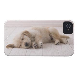 ゴールデン・リトリーバー Case-Mate iPhone 4 ケース