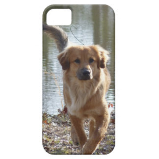 ゴールデン・リトリーバー iPhone 5 ケース