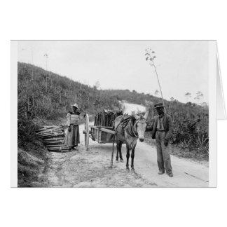 サイザルアサを、ナッサウ集めることのBahama島、c1900 カード