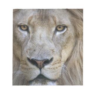 サクラメントの動物園の成人男子のライオン、カリフォルニア ノートパッド
