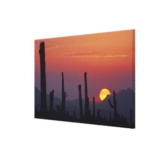 サグアロのサボテンのCarnegieaのgigantea)、日没、 キャンバスプリント