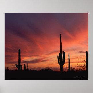 サグアロのサボテン上のアリゾナの日没 ポスター