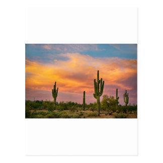 サグアロの砂漠の生命 ポストカード