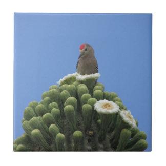 サグアロの開花のヒラのキツツキ タイル