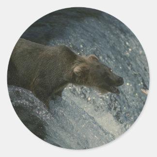 サケのための灰色グマの写真魚釣り ラウンドシール
