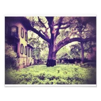 サバンナの巨大な木 フォトプリント