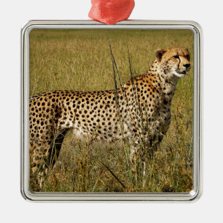 サバンナの草の野生のアフリカのチータ メタルオーナメント