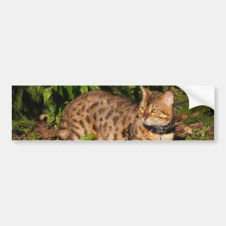 サバンナ猫の背景のバンパーステッカー バンパーステッカー
