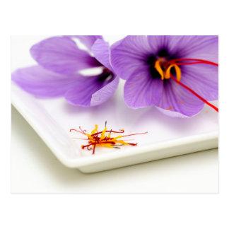 サフランの花 ポストカード