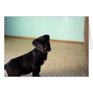 サフラン青い壁に対して提起している子犬 カード