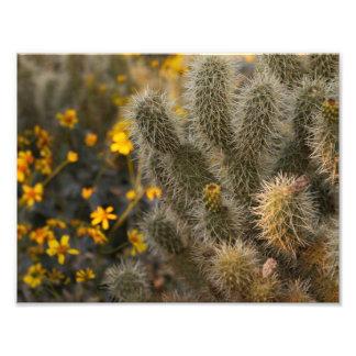 サボテンおよび野生の花 フォトプリント