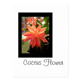 サボテンの花 ポストカード