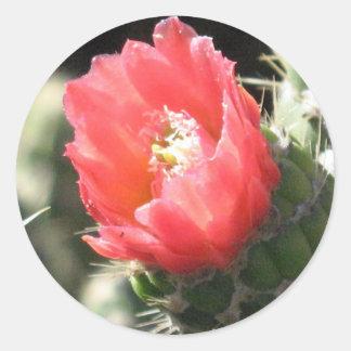 サボテンの花 ラウンドシール