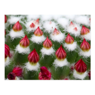 サボテンの芽 ポストカード