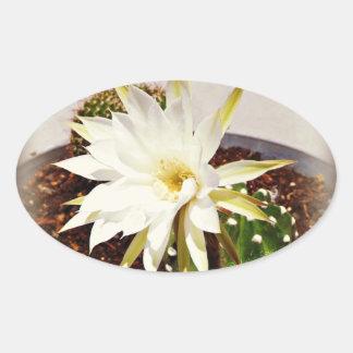 サボテンの開花 楕円形シール