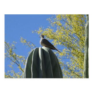 サボテンの鳩 ポストカード