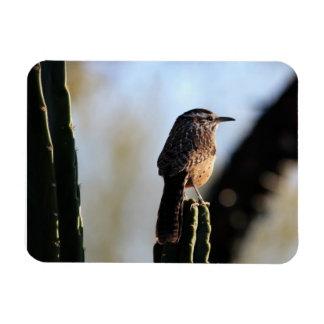 サボテンミソサザイの写真の磁石 マグネット