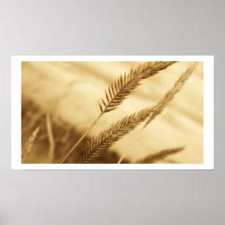 サリバン-草原草--を引きました ポスター