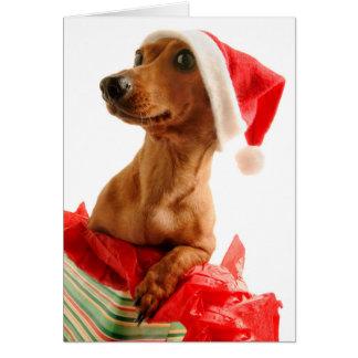 サンタの帽子が付いている現在の犬 カード