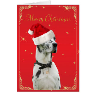 サンタの帽子の休日のクリスマスカードのグレートデーン犬 カード