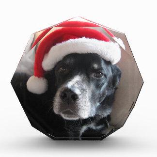 サンタの犬ラブラドールのロットワイラーの組合せ 表彰盾